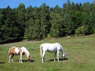 Bild:Waldhaus Wittgenthal Pferde