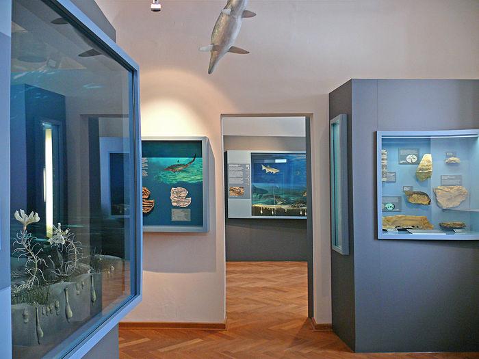 Museum Terra Triassica (1)