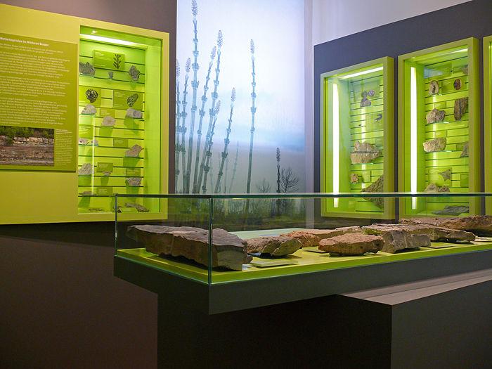 Museum Terra Triassica (2)