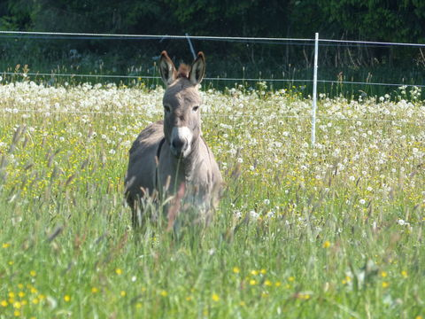 Bild:Thueringer Rhoenhaus Tiere