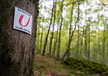Markierung_Ulmenstein_1017_3