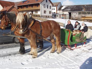 Pferdeschlittenfahrten5