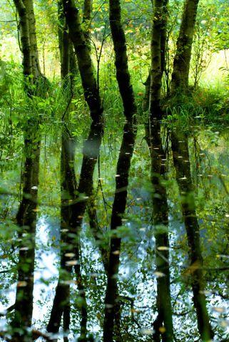 Naturkundliche Führung im Roten Moor