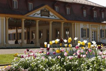 Tulpen im Kurpark Bad Bocklet